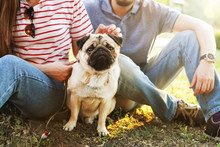 Beautiful Young Couple In Casual Outfit On Picnic In Park With Their Adorable Pug Puppy, Green Grass & Foliage Background. Man & Woman Owners W/ Small Pet, Purebred Dog. Close Up Portrait, Copy Space