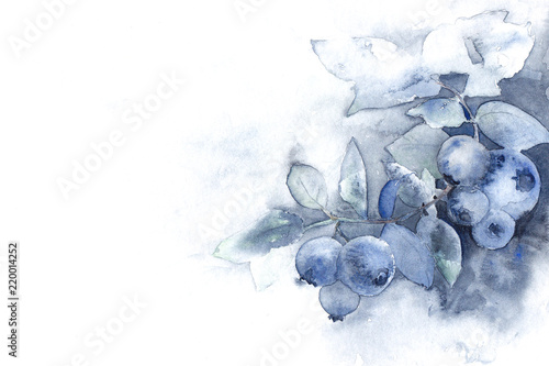 Fotografie, Obraz  soft blue watercolor ombre background texture with blueberries