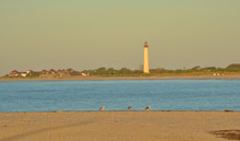 Cape May Lighthouse At Sunrise With Seagulls On Beach