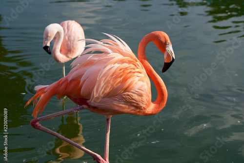 Keuken foto achterwand Flamingo フラミンゴ