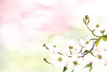 Watercolor Pink And Green Ombr...