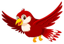 A Cute Red Bird On White Background