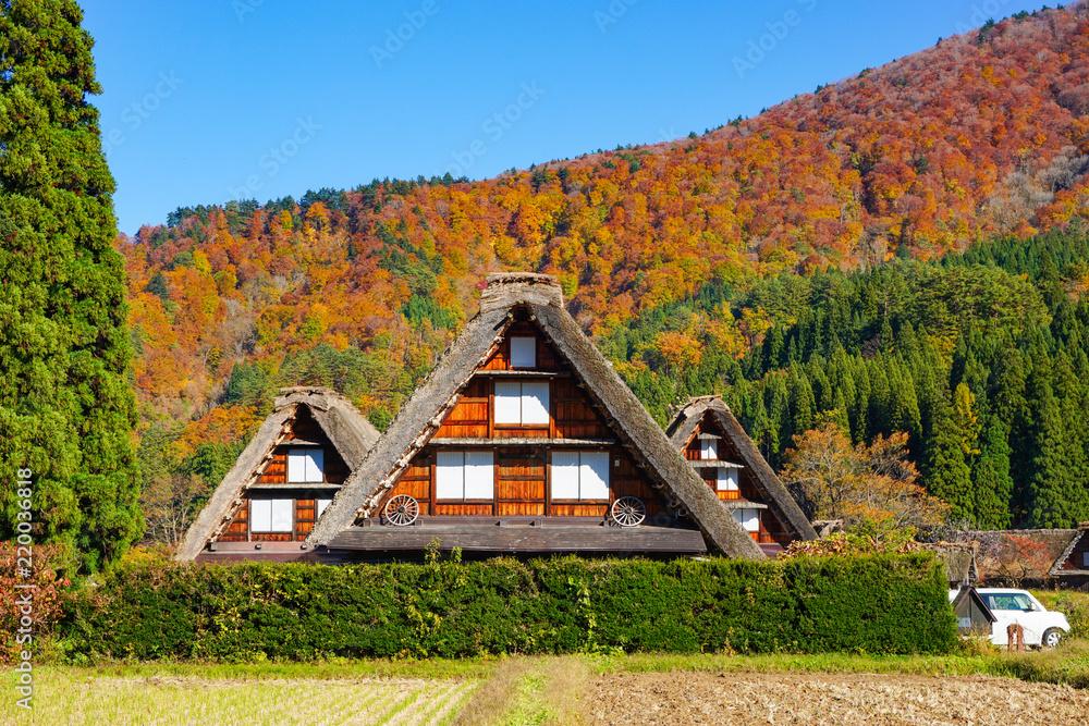Fototapeta A beautiful fall of UNESCO World Heritage Shirakawago in Gifu, Japan.  ユネスコ世界遺産白川郷の美しき秋 日本岐阜県白川村