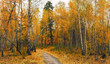 autumn sketches. landscape. autumn colors.