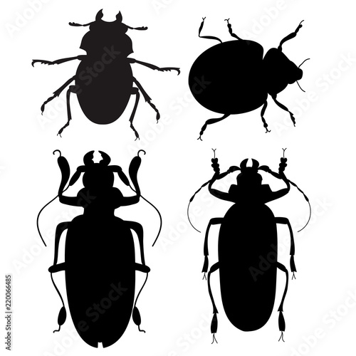 beetle, insect silhouette Canvas Print