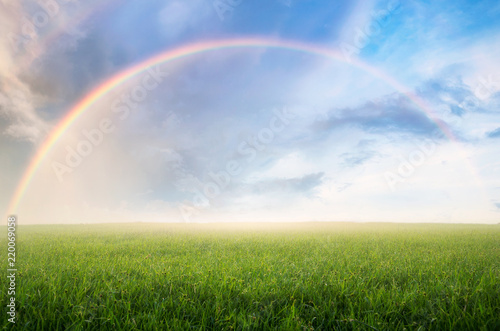 Poster de jardin Arbre Rainbow with meadow.