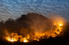 Forest Fire, Wildfire.