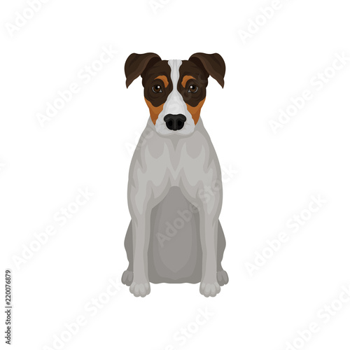 Fotografie, Obraz  Flat vector icon of sitting jack russell terrier