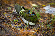 Shoes, Abandoned In The Woods,...