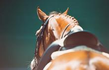 Beautiful Horse Portrait Durin...