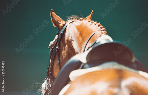 Foto op Canvas Paarden Beautiful horse portrait during dressage competition. Equestrian sport background.
