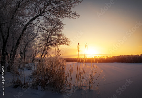 Beautiful winter landscape. The branches of the tree and reeds are covered with hoarfrost. Foggy morning sunrise. Colorful evening, bright sunshine over a river or lake.