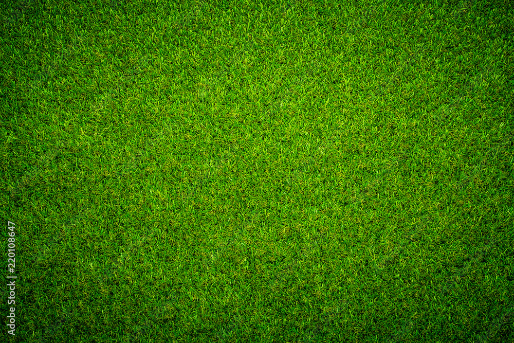 Fototapety, obrazy: Green grass background Keyword here