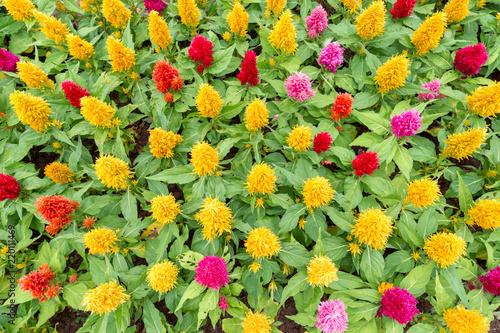 Fotografie, Obraz  colorful flower garden in the morning.