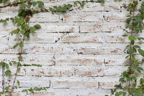 Green Climber Plant On Vintage White Brick Wall Green Leaf On White Wall Bricks For Background And Copy Space Stock Photo Adobe Stock