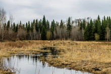 Beaver Dams And Water Ways, Be...