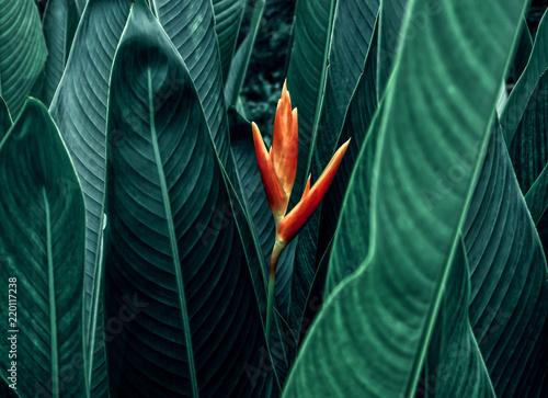 kwitnie-z-ciemnozielonym-lisciem-w-tropikalnym-dzungli-natury-tle
