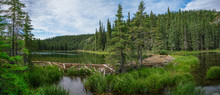 Beaver Dam In Horseshoe Lake I...