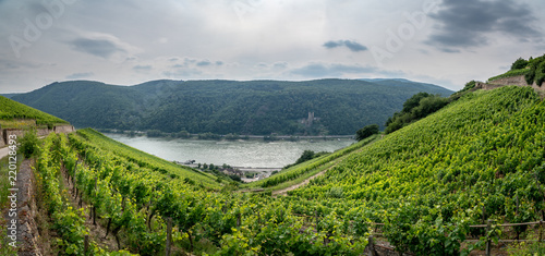 Foto op Canvas Donkergrijs Assmanshausen, Germany vineyards and river