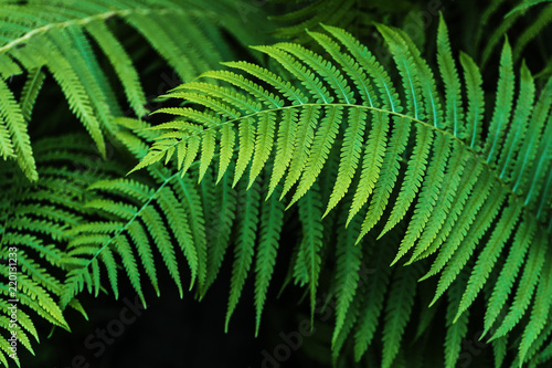 Fern leaf green foliage a natural plant background in the form of a frame