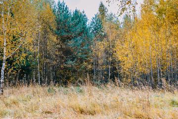 Obraz na PlexiColorful autumn landscape