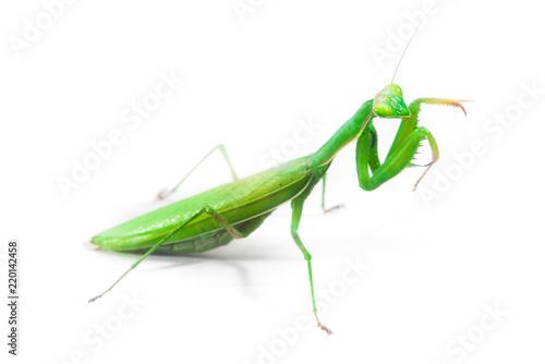 Fotografie, Obraz  European Mantis or Praying Mantis, Mantis religiosa, on isolated white backgroun