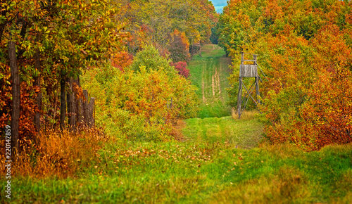Pathway in the forest with wooden ambush Wallpaper Mural