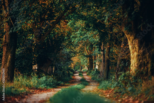 Foto auf Gartenposter Wald Bory
