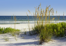 White Sands Florida Beach With Golden Sea Oats And Florida Beach Rosemary