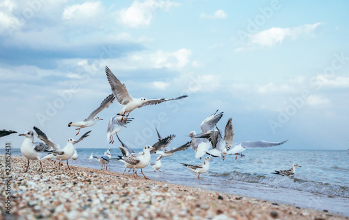 Flock of gulls on a sandy beach in Los Angeles, California