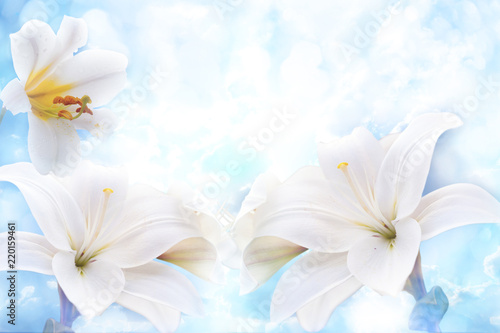Flowers of white lilies