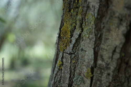 tree, wood leaf, billet, forest - Buy this stock photo and