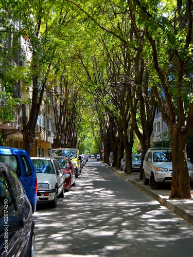 Narrow city street with cars parked on the roadside under the canopy of green trees is flooded with summer afternoon sunlight and shadows vertical frame