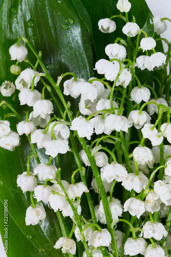 93c65622c4e lilly of the valley isolated on white - Buy this stock photo and ...