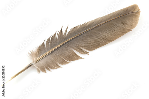 Poster Aigle Close-up of brown feather isolated on white