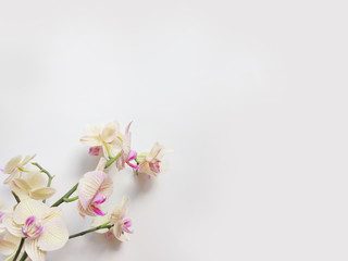 Flat lay composition with orchid flowers