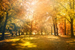 maple leaves tree natural autumn background