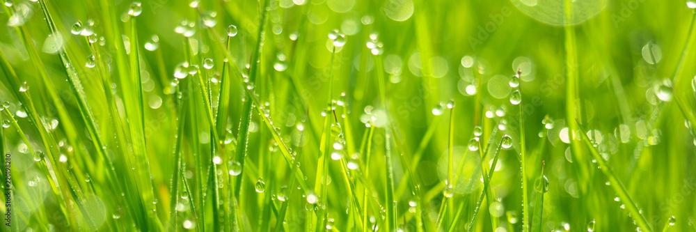 Fototapeta Frisches Gras mit Tautropfen und Bokeh