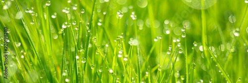 Obraz Frisches Gras mit Tautropfen und Bokeh - fototapety do salonu