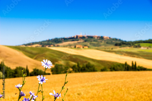 Foto  Summer view of Val d'Orcia in Tuscany, Italy