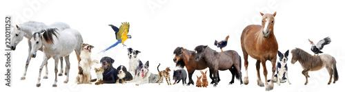 Fototapeta group of animals obraz