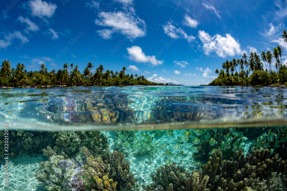 Fototapeta snorkeling in french polynesia down under world