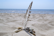 The Feather Of Gull And Seashells In The Sand, Against A Seascape Background