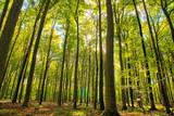 Las liściasty polska pomorze drzewa