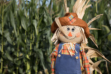 Cute, Festive Halloween Scarecrow Stand Guard In Front Of A Corn Field.