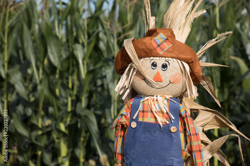 Fotografia Cute, festive Halloween scarecrow stand guard in front of a corn field
