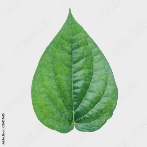 Green betel leaf isolated on the gary background with clipping path Canvas Print