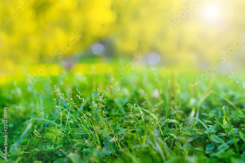 Cadres-photo bureau Jardin Summer and abstract nature background with grass green field