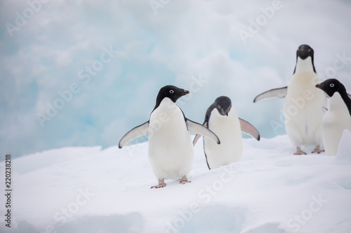 Keuken foto achterwand Pinguin penguin in the arctic