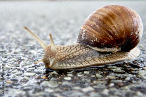 Zdjęcie XXL escargot po deszczu na ulicy